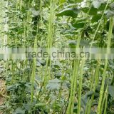 High Quality Chinese vegetable seeds Long Bean Seeds Cowpea Seeds Yard Long Bean Seeds For Cultivation-9801