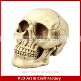 Hot sale Skull Head Decoration Figurine/Resin material Skull head /Zombia Head decoration