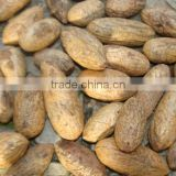 High Quality Hot Sale Kola Nuts