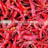 fresh red chilli pepper hot