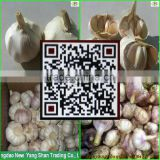 China's shandong province, one of the best fresh garlic/white garlic, exports Europe and the United States, southeast Asia