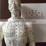 factory sales full body muscular male mannequin acupuncture human body model