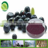 Natural Acai Berry Extract