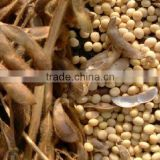Inquiry about RUSSIAN ORIGIN SOYBEANS