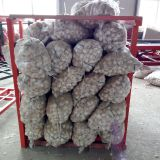 Chinese normal white dehydrated mesh bag fresh unpeeled garlic 60mm price