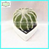 8cm new design hot sale cactus plastic bonsai tree