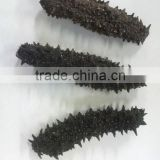 natural and healthy dry sea cucumber r made in Japan , small lot order available