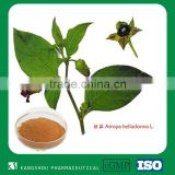 GMP Chinese herbal medicine Atropa Belladonna Extract Powder Hyoscyamine                                                                         Quality Choice