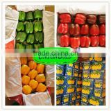 fresh bell pepper,red,yellow,green bell pepper