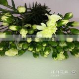 Supply high quality long stem flowers fresh cut carnation cut flower prices from Kunming flower planting base
