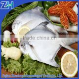 Frozen silver pomfret fish in market