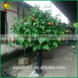 hot sale plastic apple tree handmade artificial apple tree