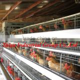 TAIYU Automated controlled system Poultry Equipment for layers ( Professional Manufacturers )