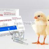 Heartleaf Houttuynia Herb Injection with Veterinary Medicine with Injection of Poultry