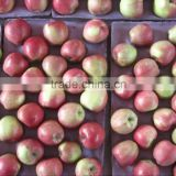 fresh red star apple /pome /huaniu aoole