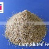 Maize Corn Gluten Feed export to Korea and Malaysia