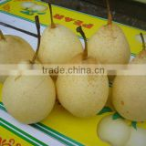 2012 China fresh ya pear