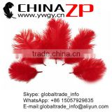 ZPDECOR No.1 Supplier in China Factory Exporting Bulk Sale from 15-20cm Dyed Dark Red Ostrich Feathers
