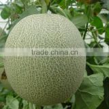 Hybrid muskmelon seeds hami melon for sale cui mi