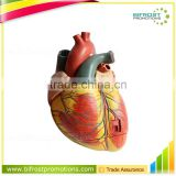 Anatomical Biological Teaching Aids Plastic Heart Model