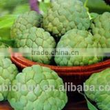 100%Natural Annona Graviola Fruit Extract 100% Natural botanical extracts Graviola Extract
