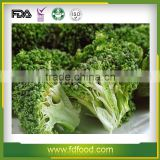 Dried Vegetable Wholesale Freeze Dried Broccoli