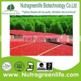 Wild Goji Extract; Wolfberry fruit Extract Natural plant extract