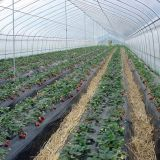 For Vegetable Growing Plastic Film Multispan Greenhouse