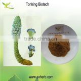 Sexy product Cistanche tubulosa powder cistanche tubulosa extract powder