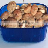 for vegetable plastic mushroom tray