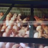 Wholesale Price Automatic Chicken Egg Incubator Hatching Machine