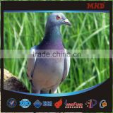 MDR6 2015 top quality fancy benzing pigeon ring making                                                                         Quality Choice