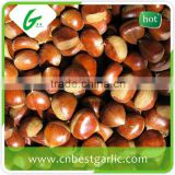 Horse fresh chestnut extract