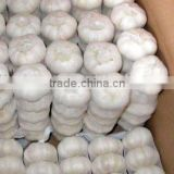 hot selling new crop fresh pure white garlic
