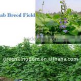 Goose Loved Forage Plant Lablab Bean Seed
