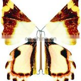 new product fly butterfly