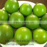 FRESH SEEDLESS LIME _ GOOD PRICE _ HIGH QUALITY