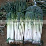 Fresh Long Onion