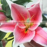 Hot Sale Real Touch Flowers Party Decoration Fresh Cut Flower Liliums Wholesale From Yunnan,China