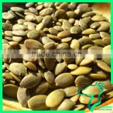 New Arrival Competitive Price White Pumpkin Seeds Kernel