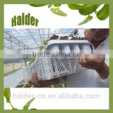 Hot high quality 28 hole white plastic PP cactus nurseries