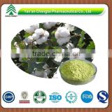 GMP factory supply herb organic Gossypol acetic acid