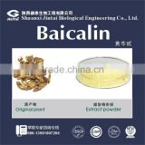 Baicalin 85% CAS NO.: 94279-99-9 Scutellaria Extract Powder