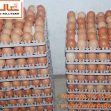 Thailand Chicken Farming Hot Galvanized Cage for Hen & A Type Battery Layer Breeder Chicken Cage & Layer Coop for Poultry Farm