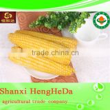 alibaba in russian canned sweet corn wholesale