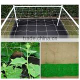 factory direct price extruded plastic pea and bean net/climbing plant support net/plants protection netting