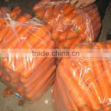 fresh vegetables baby carrots