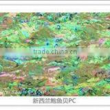 Natural green New Zealand abalone mother of pearl sea shell paper&laminate&sheet
