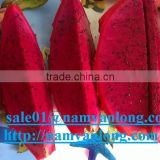 FRESH DRAGON FRUIT WITH HIGH QUALITY & THE BEST PRICE