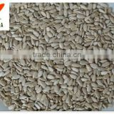 New crop chinese sunflower seeds kernels(bakery)